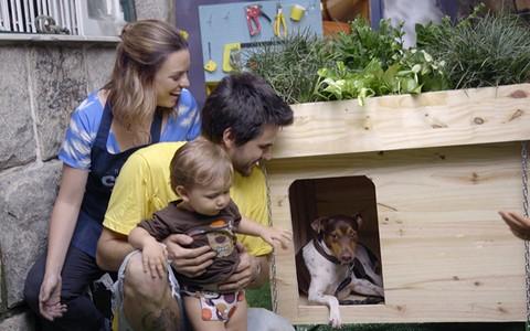 Aprenda a fazer uma casinha de cachorro com teto verde