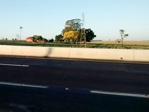 Apoena diz que barreiras na rodovia dificulta a passagem dos animais (Foto: Marcos Moreira de Almeida/Cedida)