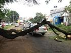 Galho de árvore cai em cima de carro e bloqueia avenida em Londrina