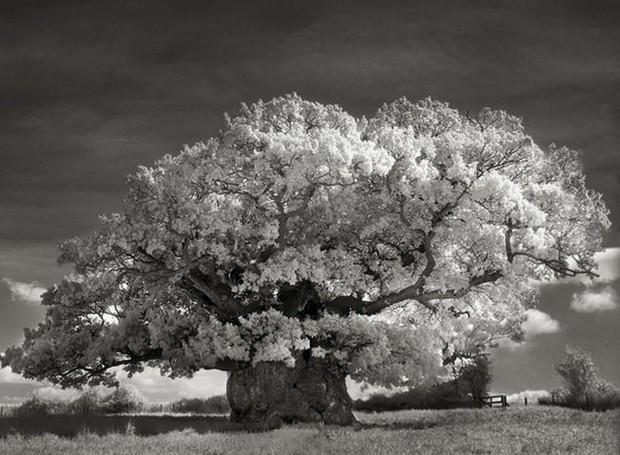 fotógrafa-registra-as-árvores-mais-antigas-do-mundo (Foto: Reprodução)