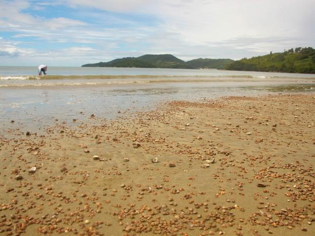 Em Porto Belo mortandade foi registrada na praia de Perequê (Foto: Prefeitura de Porto Belo/Divulgação)