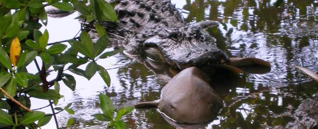 (Foto: U.S. Fish and Wildlife Service)