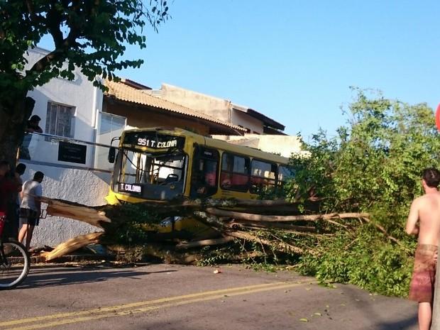 Ônibus colidiu com uma árvore em Jundiaí (Foto: Rosa Salas/Arquivo pessoal)