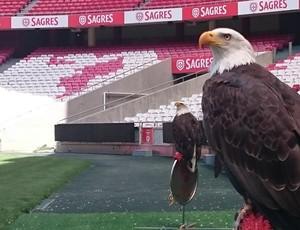 Águias do Benfica, Vitória e Gloriosa, no Estádio da Luz