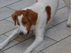 Influência humana permite a cães imitar expressões uns dos outros, diz pesquisa