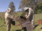 Lucratividade da apicultura atrai produtores paranaenses