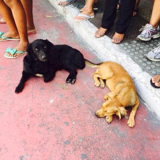 Idosa atropelada passeava com dois cães, que ficaram no local (Foto: Letícia Cardoso/ Gazeta Online)