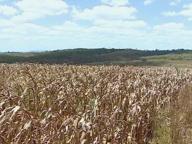 Municípios decretam situação de emergência por causa da seca (Foto: Reprodução/TV Sergipe)