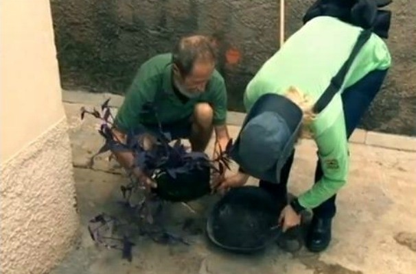 Esvazie a água dos pratos de vasos e plantas, previna a dengue (Foto: Reprodução / TV TEM)