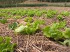 Orientação técnica para cultivo de vagens muda vida de agricultores
