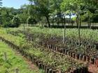 Parque Imbirussu recebe ação com plantio de mudas na capital de MS