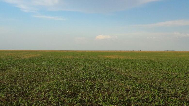 lavoura de soja piauí (Foto: Fazenda Alvorada/Divulgação)