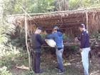 Polícia destrói cerca de 200 pés de maconha em Augusto Corrêa, PA