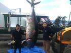 Trio se surpreende ao fisgar peixe de 330 kg na costa da Nova Zelândia