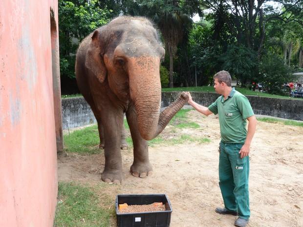Rotina de cuidados com animais no zoológico será apresentada  (Foto: Assis Cavalcante/PMS)