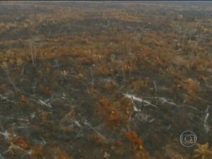 Quase um terço das terras Ararabóias foram destruídas pelas chamas (Foto: Reprodução/JN)