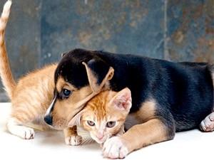 Cães e gatos serão castrados de graça em Itanhaém, SP (Foto: Prefeitura de Itanhaém)