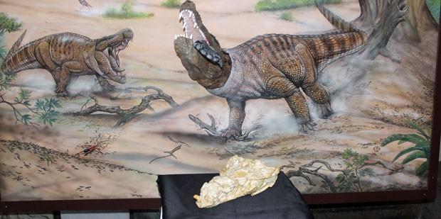 Crânio encontrado por pesquisadores brasileiros e que ajudou a descrever a espécie 'Sahitisuchus fluminensis' (Foto: Divulgação/CPRM)