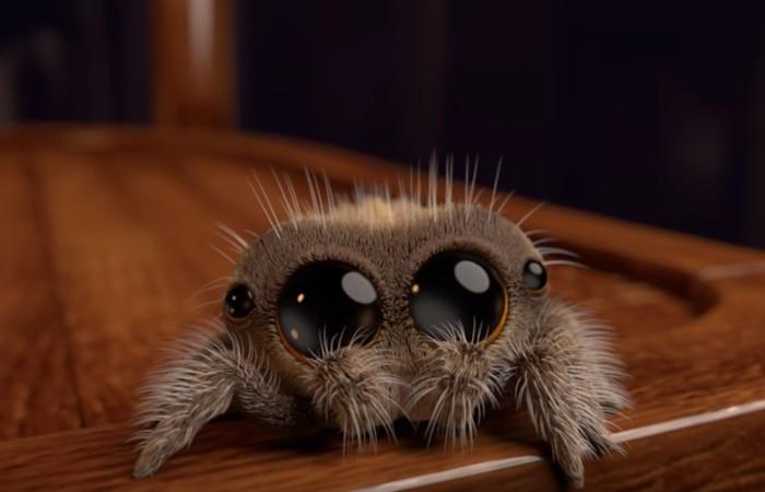 Lucas, a aranha (Foto: Reprodução/ YouTube/ Joshua Slice)
