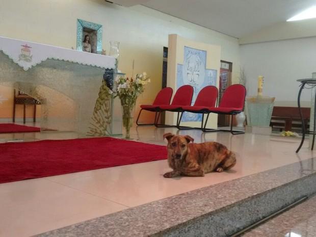 Cachorro é visita frequente na igreja (Foto: Alexandre Azank / TV TEM)