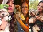 Thor e Mel são os nomes de cães mais populares no Brasil; veja lista!