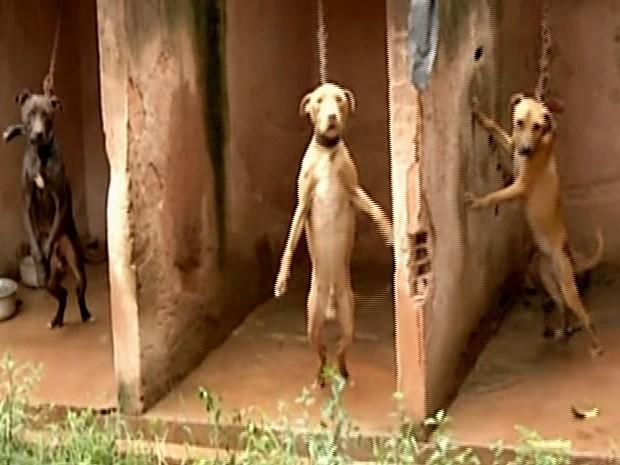 Cães subnutridos são resgatados abandonados em casa de Valparaíso de Goiás (Foto: Reprodução/TV Anhanguera)
