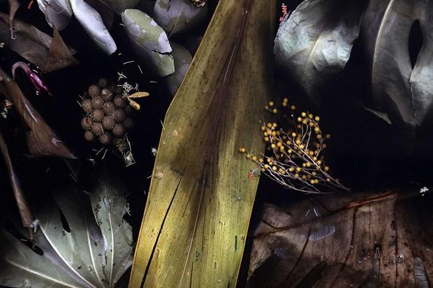 7_Flora Cabinet (Foto: divulgação )