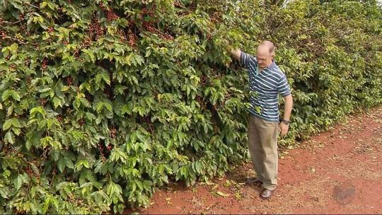Chuva constante atrapalha colheita de café no Sul de Minas