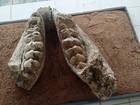 UFRN retoma escavações em sítio arqueológico de Florânia, no RN