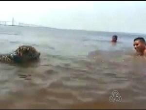 Militares tomam banho com onça cumprindo normas de segurança, diz o CMA (Foto: Reprodução / Rede Amazônica/ Internet)