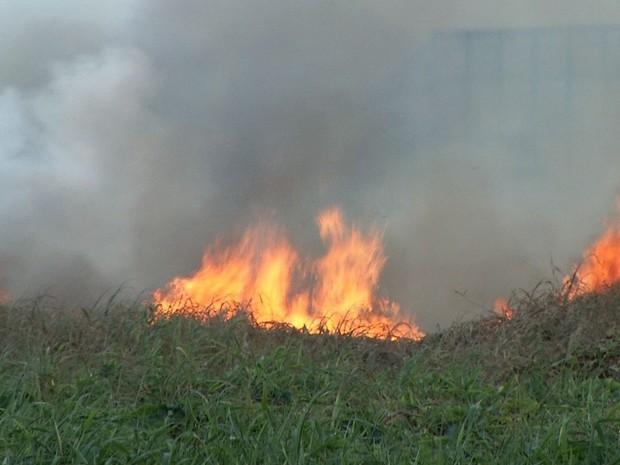 Incêndio atinge Parque do Cocó, próximo à Avenida Raul Barbosa (Foto: Reprodução/TV Verdes Mares)