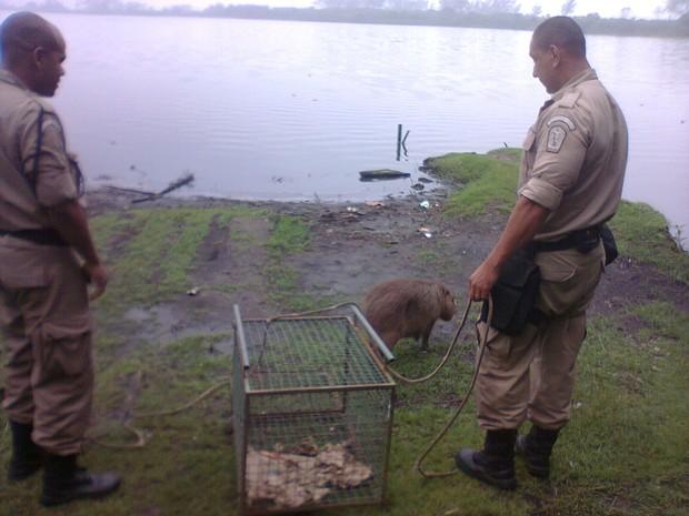 Capivara foi liberada no Parque do Marapendi (Foto: Divulgação/ Secretaria Municipal de Meio Ambiente)