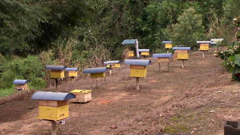 abelhas-inverno-alimentacao (Foto: Reprodução/TV Globo)