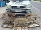 Homem é preso e polícia resgata 17 animais silvestres em Aquiraz, no CE