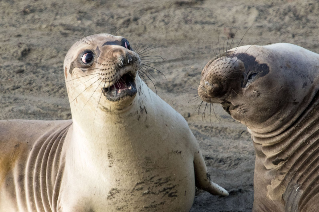 Eita! (Foto: George Cathcart/ Comedy Wildlife Photo Awards)