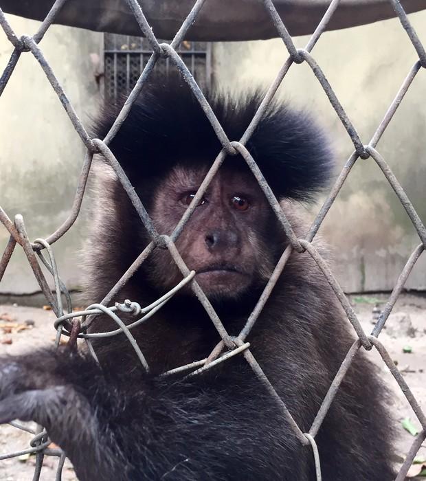 Macaco-prego em jaula  remendada com arames no Zoológico do Rio (Foto: MPF/RJ)