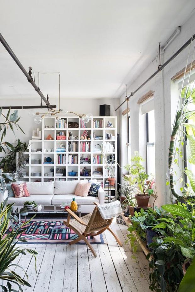 Plantas na sala (Foto: Pinterest/Reprodução)