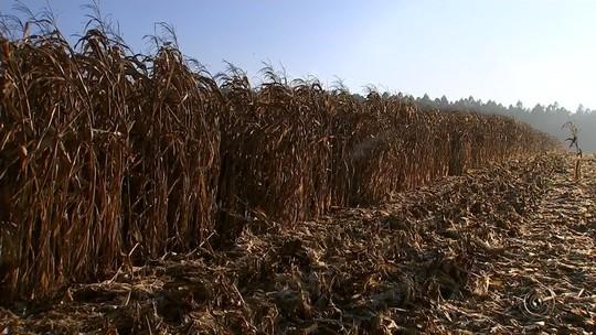 Conheça como é feito o trabalho do agricultor que movimenta a economia da região