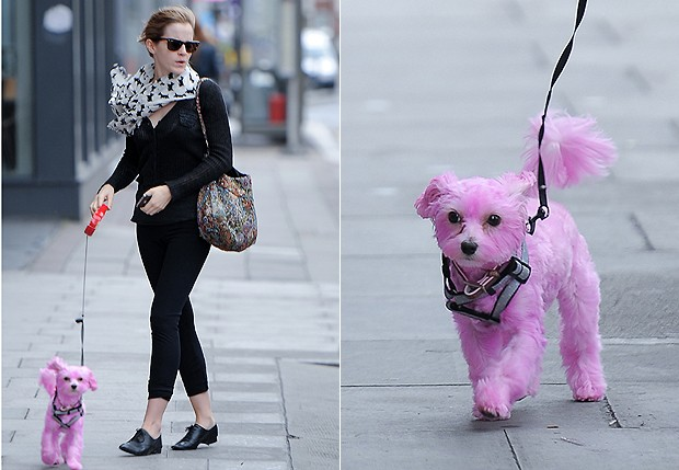 Emma Stone e a cachorrinha  (Foto: Grosby Group)