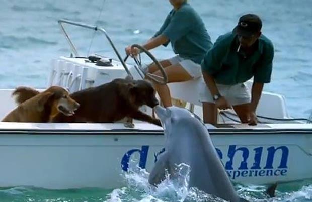 Vídeo mostra golfinho 'beijando' cachorro (Foto: Reprodução)