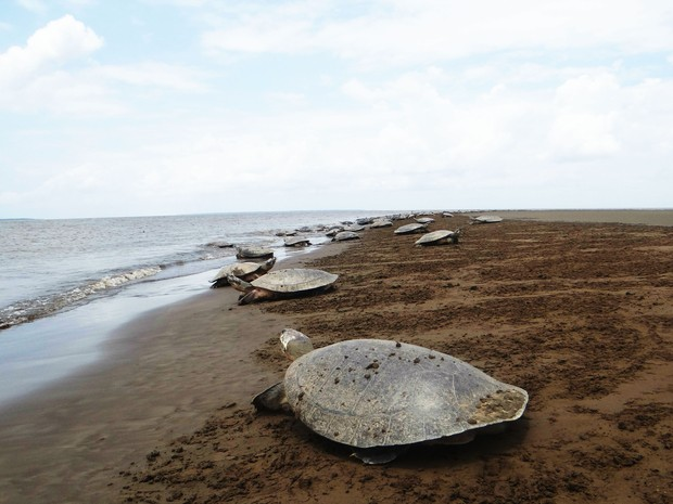 Projeto visa promover em nove estados brasileiros a preservação de 18 quelônios  (Fot Eliazar Bezerra/Ibama)