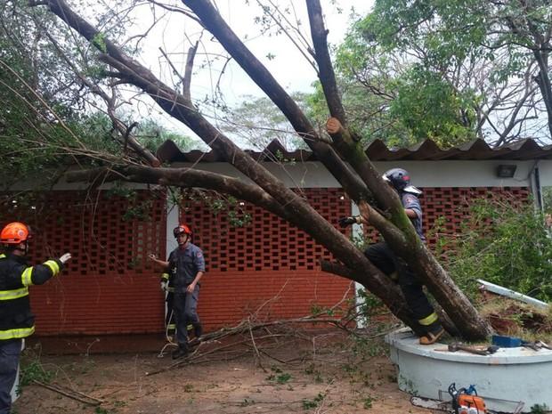Uma árvore caiu no pátio da Escola Estadual Professora Surely da Silveira Marin Batista (Foto: Rafael Honorato/Rádio Assunção)