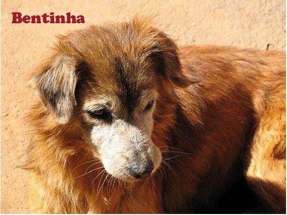 A prioridade da adoção à distância é para os animais mais velhos (Foto: Miriam Miranda/ONG Vira Lata Vira Vida)