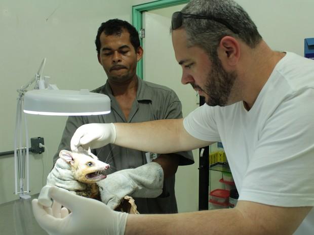Segundo veterinário Marius Belluci, Centro de Triagem faz trabalho de Centro de Reabilitação.  (Foto: Natália Souza/G1)