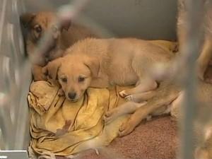 Prefeitura de Ponta Grossa retomou castração de cães de rua e de cachorros de famílias carentes (Foto: Reprodução/RPC TV)