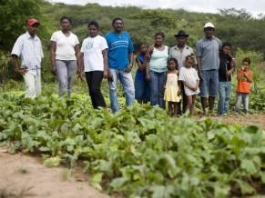 Horta comunitária agroecológica na comunidade quilombola de Feijão, Mirandiba, sertão de Pernambuco (Foto: Luca Zanneti/ Action Aid/ Divulgação)