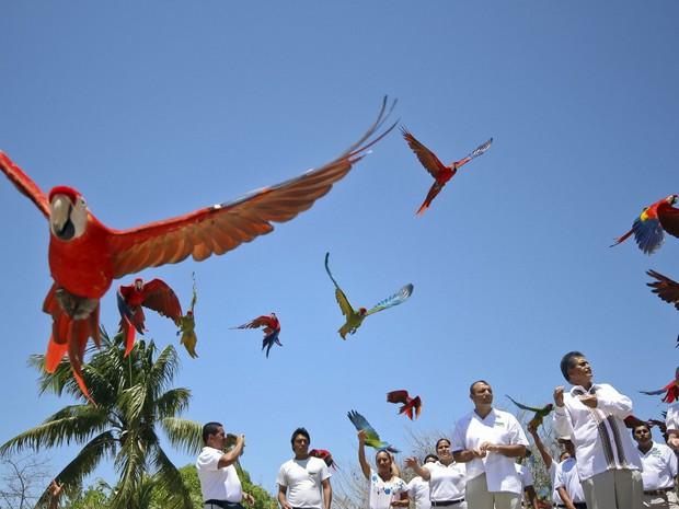 Araras-vermelhas voam soltas no parque Xcaret, na Riviera Maia, perto da cidade de Playa del Carmen, no México. O parque foi reconhecido como recordista pelo livro Guinness depois de registrar 132 araras-vermelhas nascidas em suas dependências. (Foto: Elizabeth Ruiz/AFP)