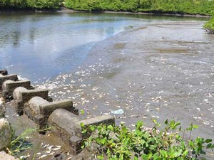 Muitos peixes foram levados pela correnteza do rio, segundo pescadores (Foto: Walter Paparazzo/G1)