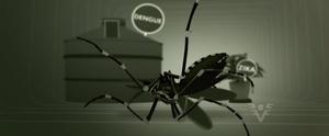 Conheça os principais cuidados para acabar com focos do mosquito Aedes aegypti; veja aqui (Reprodução/TV Tribuna)