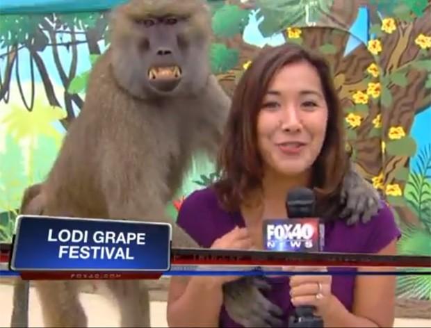 Sabrina Rodriguez ficou sem graça ao perceber 'mão boba' de babuíno (Foto: Reprodução/YouTube/Ktxl FOXForty)